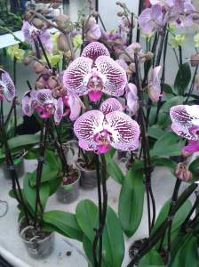 Enigmatic orchids