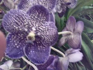 50 Shades of Orchids in Venice
