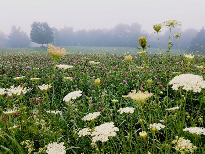 Foggy walk precedes August rain